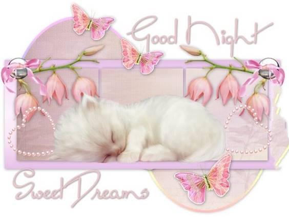 good night darling 1