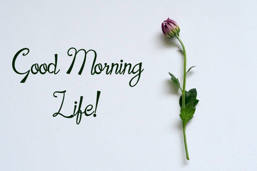 Beautiful Good Morning Life Images And Quotes Positive Energy